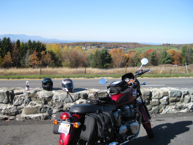 Bonnie overlooking Taconic