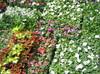 Mass_of_flowers